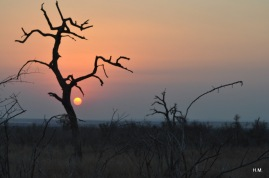 Coucher de soleil sur le bush