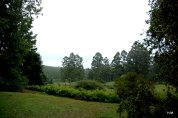 Forest arm (Swaziland)
