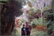 Dans la forêt primitive