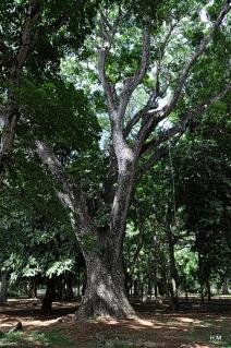 Parc botanique de Pamplemousses