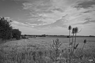 Dans les champs à Thoigné