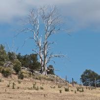 Tasmanie_2015_150