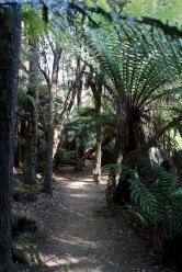 Tasmanie_2015_163