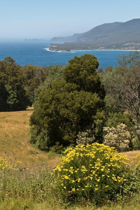 Tasmanie_2015_Numéro de série à 3 chiffres_7