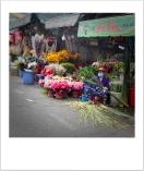 Cho Hoa Ho Thi Ki 2021-02-06-09-15-11